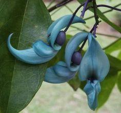 fleur de jade