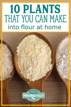 When the SHTF and you need to ditch the commercial grains, will you have a supply of flour to make breads at your house? Here are 10 gluten free flours that you can grow and mill at home in to delicious and nutritious flours for baking and cooking Gluten Free Flour, Gluten Free Diet, Gluten Free Baking, Gluten Free Recipes, Sin Gluten, Raw Food Recipes, Healthy Recipes, Food Tips, High Protein Flour