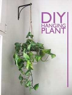 DIY #Hanging_Planter - just three lengths of string and a few knots. Looks easy and a discrete way to use what you have, e.g. to add a little green to the bathroom