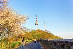 Tháp Namsan điểm đến của sự lãng mạn tại Hàn Quốc Cn Tower, Building, Travel, Viajes, Buildings, Destinations, Traveling, Trips, Construction