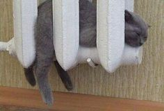 Sicuramente, questo micio non sentirà freddo!