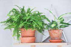 Rośliny dla opornch Planter Pots