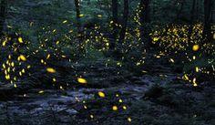 Tennessee fireflies: A summertime light show - CBS Sunday Morning - Videos, Interviews, Arts, & Commentary - CBS News