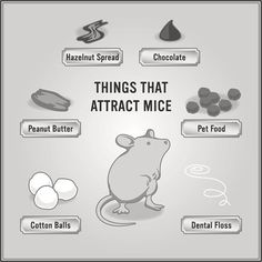 Tips on How to Get Rid of Mice in Five Steps Best Mouse Trap, Mouse Traps, Diy Mice Repellent, Mice Removal, Catch A Mouse, Getting Rid Of Mice, Rat Traps, Mice Control, Shopping