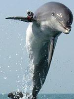 Delfin espia