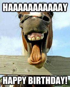 * Haaaaaaaaaay Happy Birthday! Horse