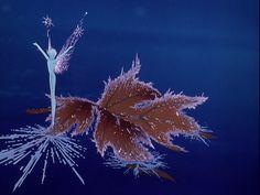 The Waltz of the Snowflakes ~ Fantasia