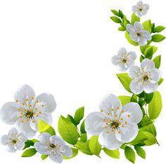 Photos - New Deko Sites Art Floral, Floral Drawing, Wallpaper Nature Flowers, Flower Wallpaper, Flower Frame, Flower Art, Easter Flower Arrangements, Decoupage Vintage, Flower Clipart