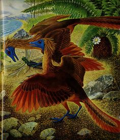 Archaeopteryx with Hoatzin style colorations. Lots of kids books in the 80's & 90's made comparisons between Archaeopteryx and the modern Hoatzin bird, mostly because the latter is the only modern bird with noticeable wing claws.
