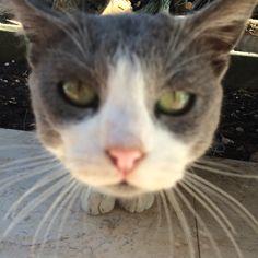 Ciao bello gattino
