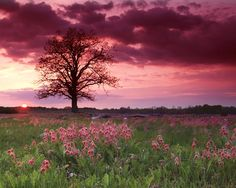 "Prairie Smoke at Sunset"" Manitoulin Island, Ontario, Canada Beautiful Beautiful Sky, Beautiful Islands, Beautiful Places, Wild Flower Meadow, Wild Flowers, Manitoulin Island, My Sun And Stars, Earth From Space, Pink Sky"
