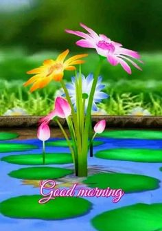Good Morning Friends Images, Good Morning Beautiful Pictures, Good Morning Roses, Good Night Love Images, Good Morning Beautiful Quotes, Good Morning Beautiful Images, Good Morning Picture, Morning Pictures, Good Morning Greeting Cards