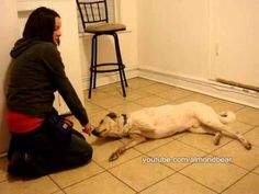 """How to teach your dog to play dead """"Bang Bang"""" Chicago Dog Training"""