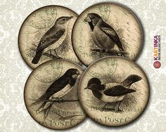 Instant Download VINTAGE BIRDS - 4 inch and 3.8 inch Circles Digital Collage Sheet Printable for Coasters Magnets Greeting Cards