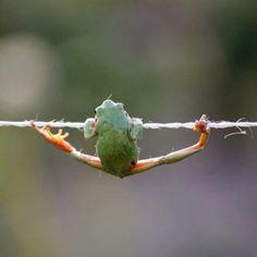 training frog!