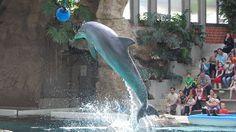 Petition · Delfinarium im Zoo Duisburg schließen! · Change.org - Delfine gehören nicht in Gefangenschaft!