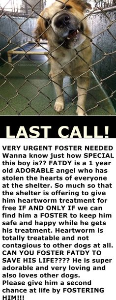 If you can foster FATDY, please email ASDfoster@miamidade.gov and copy pets@miamidade.gov including his name and ID #A1696078 AND PLEASE ACT FAST!!!! He needs a foster to step up to save him ASAP or he will be euthanized. Miami Dade https://www.facebook.com/urgentdogsofmiami/photos/pb.191859757515102.-2207520000.1433332874./986550728045997/?type=3&theater