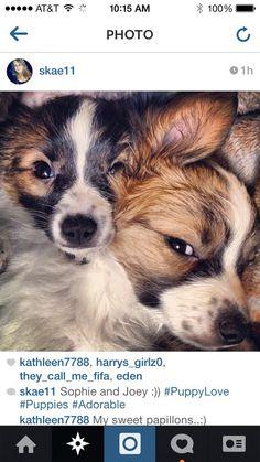 Top 10 Cutest Pups On Instagram