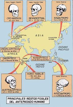 Early man and where fossils were found Biological Anthropology, Forensic Anthropology, Earth Science, Science And Nature, Human Evolution Tree, Evolution Science, Alternate History, Prehistory, Ancient History