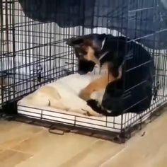 puppies with babies video Cute Funny Dogs, Cute Funny Animals, Adorable Dogs, Cute Pets, Cute Animal Videos, Cute Animal Pictures, Animal Pics, Cute Dogs And Puppies, Doggies