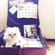 Gut gut home#cats #kitten #lovecats #ragdoll #chinchilla #Persian #kitten #meow #lovecat