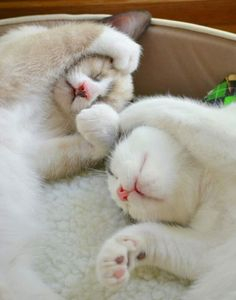 sweet sleeping kitties