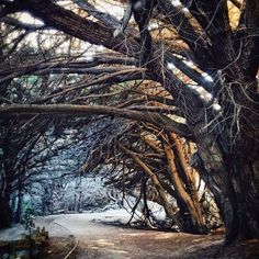 Pfeiffer Beach in the Bay Area is hauntingly beautiful.    Photo courtesy of ravenreviews on Instagram.
