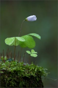 You actually have to click on the picture to see how delicate the dewdrops are:via fairies wear boots