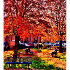 I colori dell'autunno  Photo by ariannabologna  http://instagram.com/p/RMnaAErXAz/