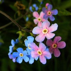 Forget-me-nots on Pinterest | Forget Me Not, Lady Bug and Royals