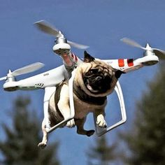There has been a lot of chatter about flying taxis for people. Next up, Uber Air Taxis for dogs   #djiphantom4 #djiglobal #uav #gopro #puggle #djiinspire1 #quadcopter #miniquad #djiphantom3 #robotics #robot #aerialphotography #fpv #drones #hexacopter