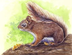 Watercolor painting of squirrel on tree • Buy this artwork on apparel, stickers, phone cases, and more.