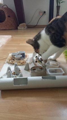 Zeigt her Eure Fummelbretter - Seite 20 - Katzen Forum - Cozie Pets - - Katzen - Katzen Bilder Kittens Cutest, Cats And Kittens, Cute Cats, Diy Cat Tent, Homemade Cat Toys, Getting A Kitten, Cat Hacks, Cat Accessories, Mundo Animal