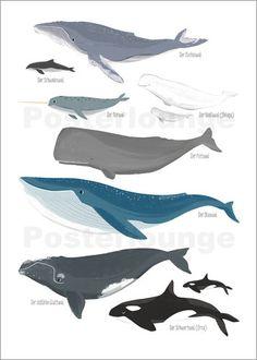 Sandy Lohß - cetaceans