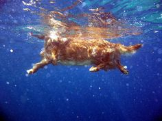 Swimming Dog.