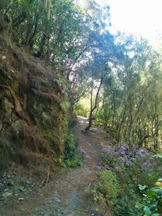 Forest Trek Tenerife - Want to learn how it's like to be hiking in Tenerife? Read our guide on how to get ready and what to bring with you for the day.