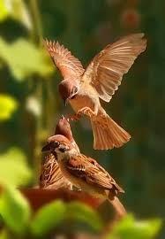 Resultado de imagen para beautiful bird flying in the sky