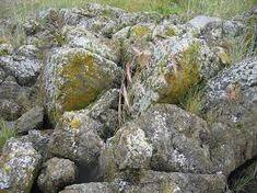 lichen on rock Invasive Plants, Rare Plants, Natural Ecosystem, Plant Information, Bouldering, Habitats, Wild Flowers, Grass, Rocks