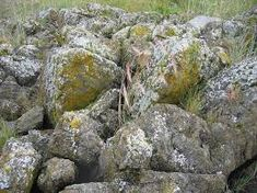 Image result for rocks and boulders in forest