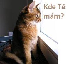 gify   Chybíš mi Cats, Animals, Beautiful, Gatos, Animales, Animaux, Animal, Cat, Animais