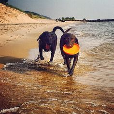 Happy Labor Day, #PureMichigan! Fall might be approaching, but there's still time to enjoy the beaches. Thanks to Instagrammer @jasminedawnrogers for sharing this shot of Solo and Leia enjoying a day on Lake Michigan in Muskegon. What Michigan beach is your dog's favorite? #PureMichigan #Muskegon #LaborDay #DogsofInstagram #LakeMichigan