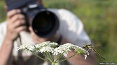 Hints & Tips to Improve Your Wildlife Photography