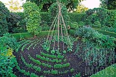 Simple twig teepee for a central focal point in a circular or spiral garden...