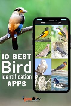 Apps and websites helping kids learn bird identification, by bird color, bird size, bird songs, bird call, … Including birds in North America, Europe. Wonderful interactive and multimedia science tools for kids and adults to learn about backyard birds while bird watching. Steam Activities, Science Activities For Kids, Teaching Science, Family Activities, Stem Learning, Outdoor Learning, Learning Resources, Science Tools, Science Fair Projects