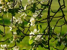 Bálint György kertről, növényekről   Április végi kerti teendők – a legfontosabbak Fruit, Garden, Garten, Lawn And Garden, Gardens, Gardening, Outdoor, Yard, Tuin