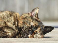 Katze sonnt sich :)  Na wer erkennt die Augen und den Mund? :D Animals, Cat, Eyes, Animales, Animaux, Animal, Animais