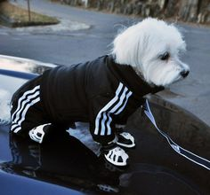 Addidas Doggy Tracksuit