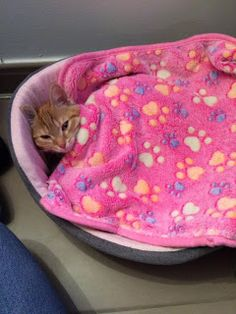Pinky's Blog: Goede avond iedereen!  We hebben een hele goede g...
