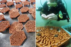 3D printed product designs that exhibit the endless possibilities of this innovative technique! | Yanko Design Printing Process, 3d Printing, Coral Life, Reuse Containers, Marine Environment, Terracota, Environmental Art, Patterns In Nature, Tile Patterns