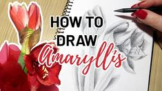 Another Christmas flower drawing tutorial! I'll show you how I draw amaryllis Christmas flowers step by step. This will be a greyscale drawing since I'm usin. Free Coloring Pages, Coloring Books, Flower Drawing Tutorials, Amarillis, Creative Arts And Crafts, Christmas Flowers, Step By Step Drawing, Repeating Patterns, Craft Tutorials